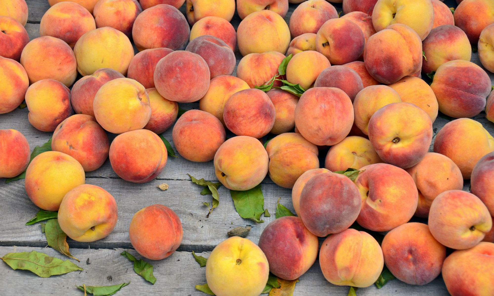 ungers-peaches-produce-header